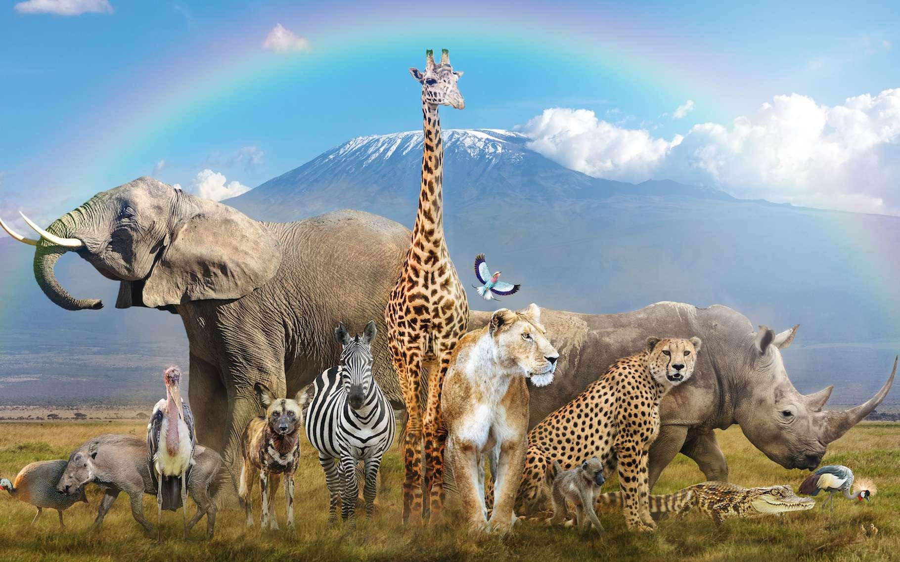 Safaris : en France, il y a des safaris ?